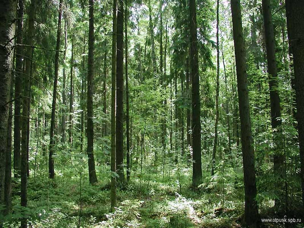 Связали и оставили в лесу