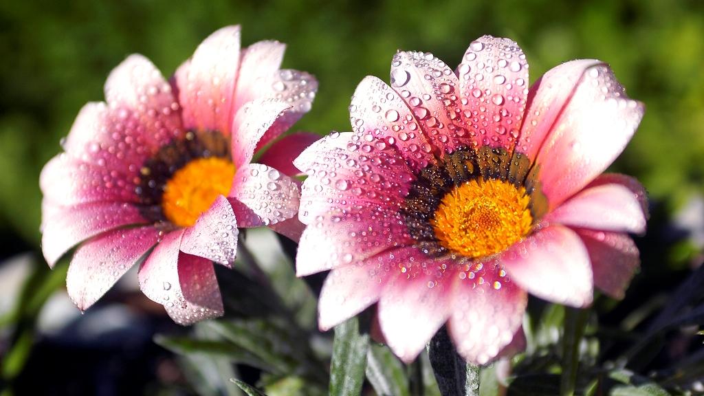 Картинки высокого качества цветы 3